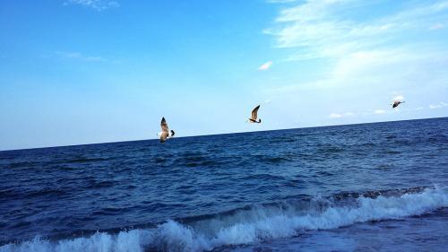 Плаж Делфин Ахтопол 03